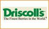 DRISCOLL'S (Chillan)
